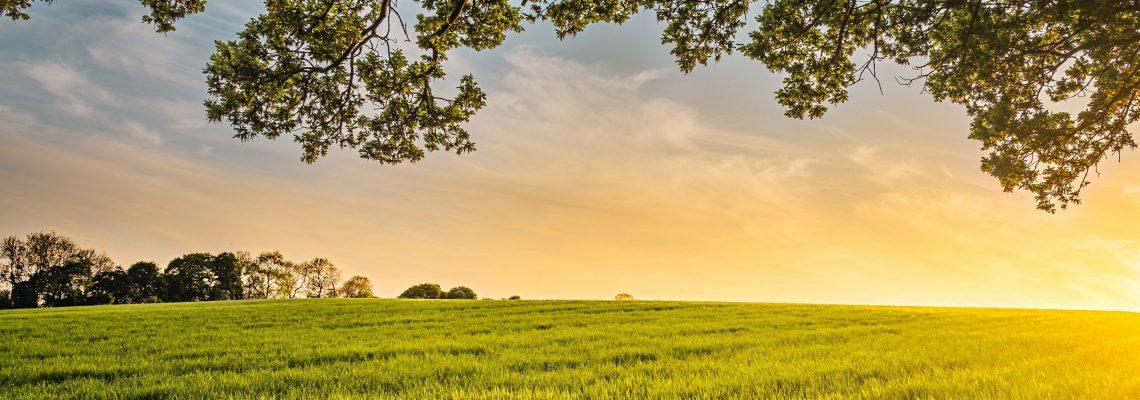 I Aula Rural: La sostenibilidad en el ámbito rural: qué significa y cómo conseguirla. La economía azul